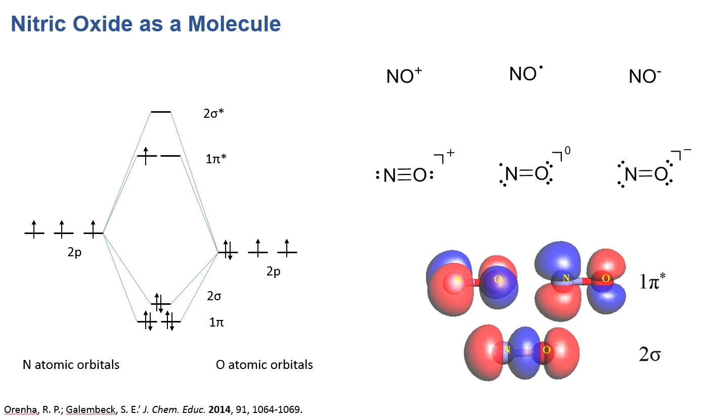 a diagram of Nitric Oxide as a molecule